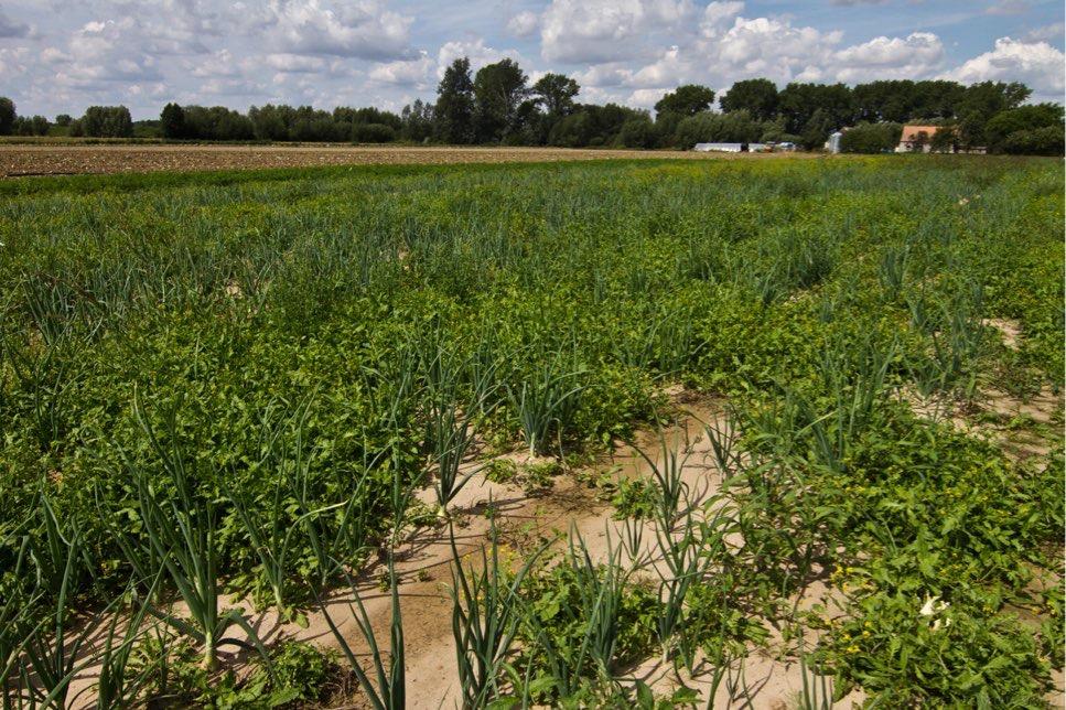 gielda rolna i towarowa