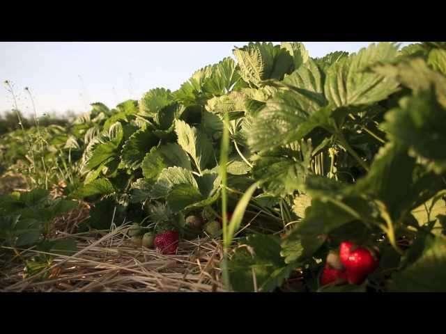 plantacja owoców