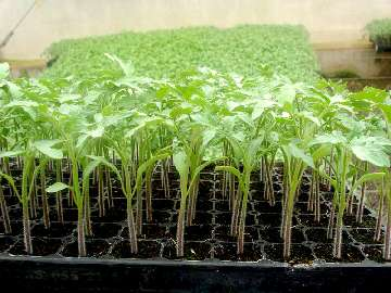 notowania zbóż w polsce