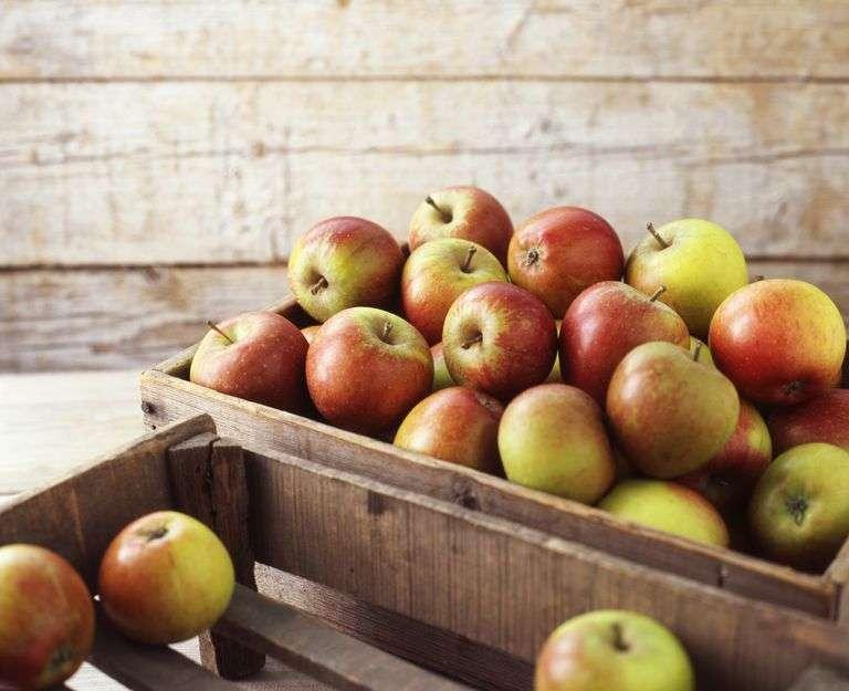 pielegnacja drzew owocowych