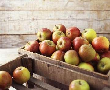parch jabłoni objawy