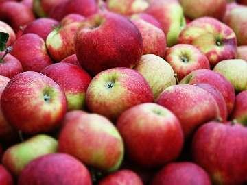 plamy na liściach jabłoni