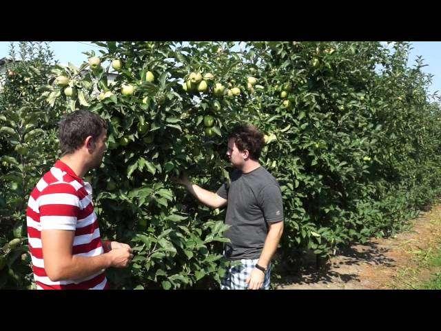 uprawa arbuza w polsce
