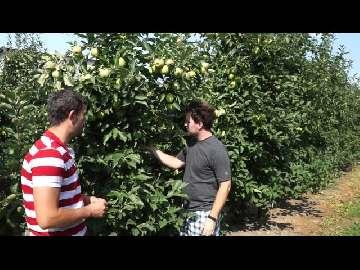 pordzewiacz jabłoniowy