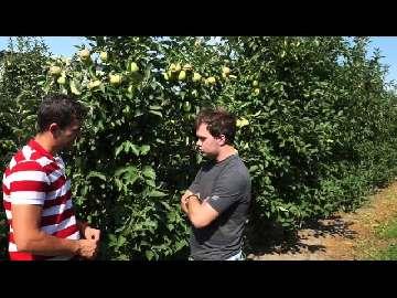 przechowywanie jablek