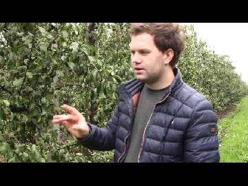 rozwój jabłoni