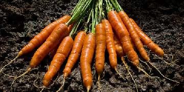 maszyny rolnicze urzywane