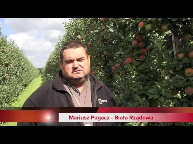 choroby jabłoni zdjęcia