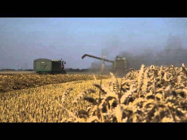 ceny zbóż świętokrzyskie