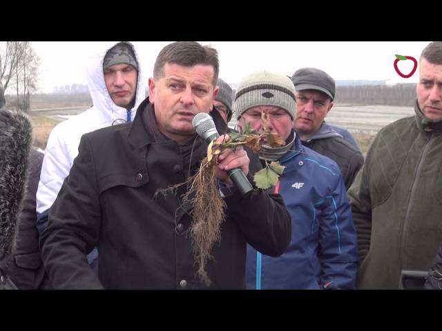 Akademia Uprawy Truskawek w Warce  - Czy truskawki przemarzły