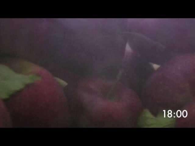 choroby jabłoni zwijanie liści