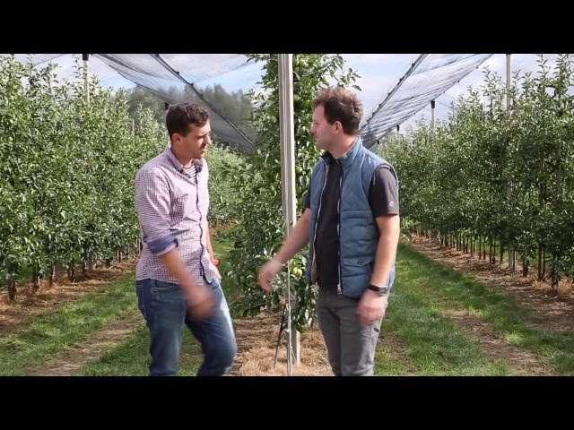 szkodniki jabłoni wiosną