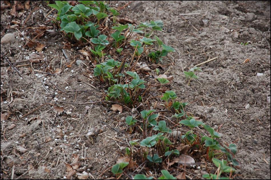 środki ochrony roślin etykiety