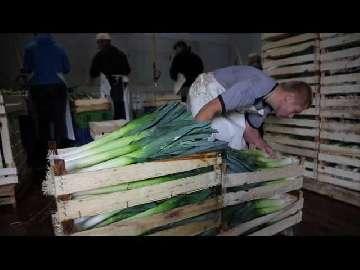 por warzywa