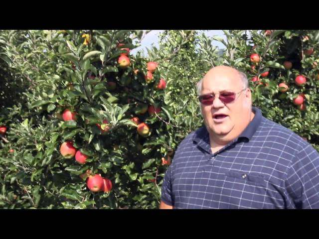 cięcie drzew owocowych zdjęcia