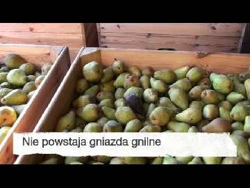 Ocena przechowywania gruszki - Najabrskaja Luty 2014