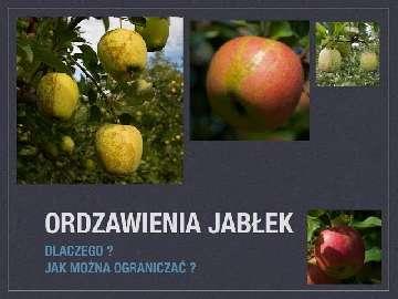 ograniczanie ordzawień jabłek cz 1 - wzmocnienie kutykuli zawiązków
