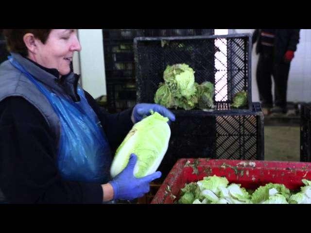 rozsada warzyw