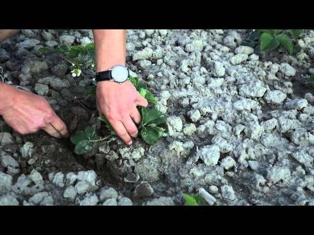 szkodniki roślin sadowniczych