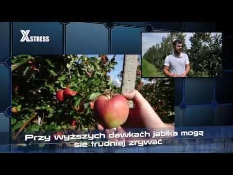 ukorzenianie jabłoni