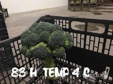 Przedłużenie przydatności handlowej brokuła.