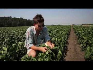 jak sadzić paprykę z nasion