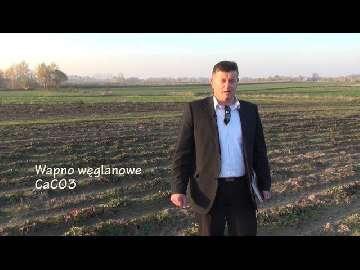 Wapnowanie plantacji truskawek w gruncie. Część I