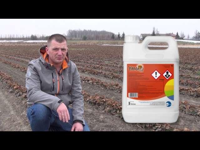 Nowy fungicyd do ochrony truskawek.