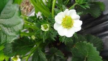 KOMUNIKAT nr XI - Poprawa odporności roślin na stres biotyczny poprzez właściwe odżywienie.