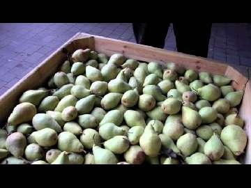 Przechowywanie gruszek jabłek -5 miesięcy. Mariusz Pagacz. . Bez pleśni i zgnilizny.Duże zyski
