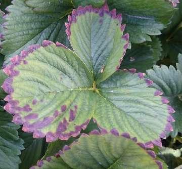 KOMUNIKAT nr XXI - Poprawa produktywności roślin w okresie owocowania