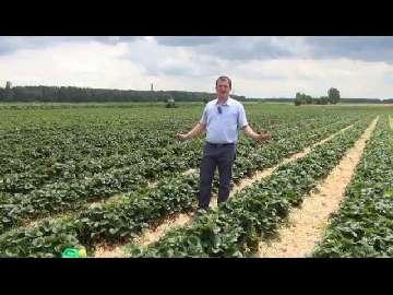 Demo Farma Grupy Truskawkowej część I