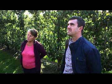 choroby grzybowe liści gruszy