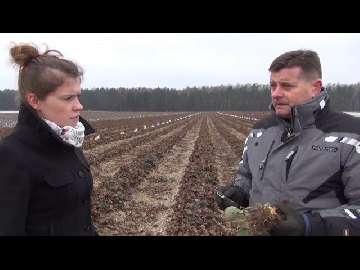 Kondycja truskawek po zimie, czy są problemy z uszkodzeniami mrozowymi?