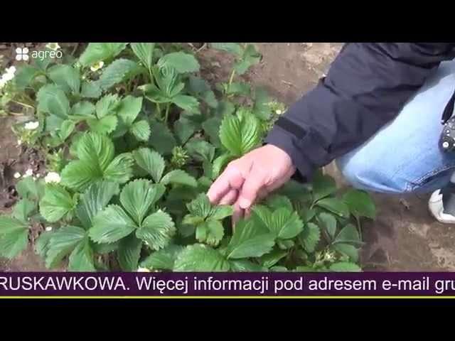 Aby pomóc roślinom a nie szkodzić