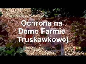 Ochrona truskawek na Demo Farmie