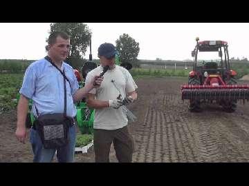Czym i jak sadzić truskawki?