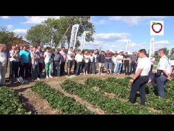 Nawożenie truskawek po zbiorze owoców na letnich warsztatach z Grupą Truskawkową.