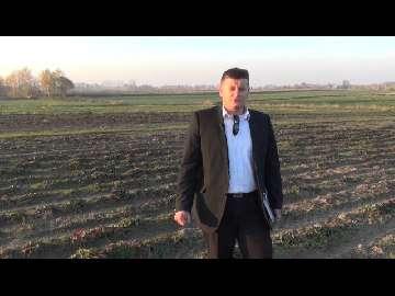 Wapnowanie plantacji truskawek w gruncie. Część II