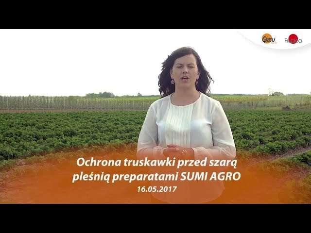 Walka z szarą pleśnią o plon. Informacje od partnera Grupy Truskawkowej firmy Sumi Agro Poland.