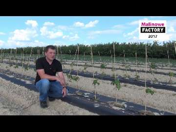 Zakładamy nową plantację malin (Malinowe Factory 2017)