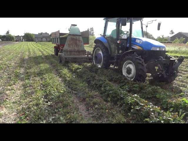 Krótki filmik o koszeniu liści truskawek przy pomocy Orkana