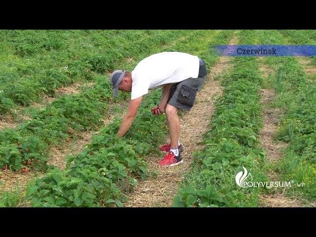 giełda rolna bronisze