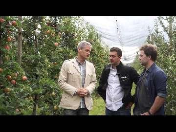 Susza a wybarwienie jabłek.