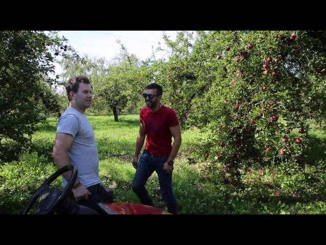 Jabłko przemysłowe.