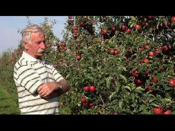 Jak zapobiegać biologicznie? 7 lat stosowania Polyversum w sadzie.