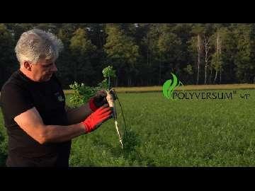 Jak zapobiegać chorobom przechowalniczym warzyw korzeniowych?