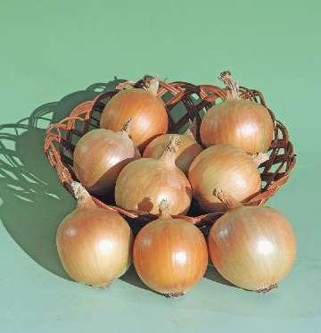 skup cebuli