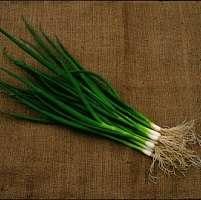 zwalczanie chwastów w cebuli