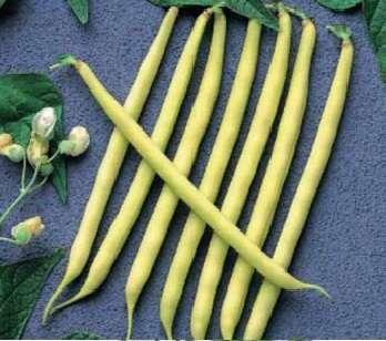 nasiona bobiku